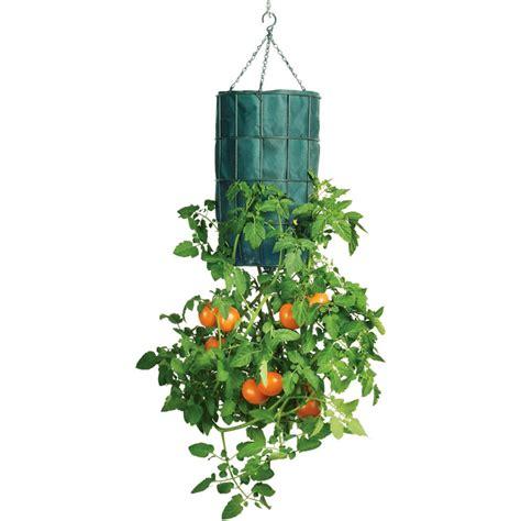 tomato upside planter down revolution