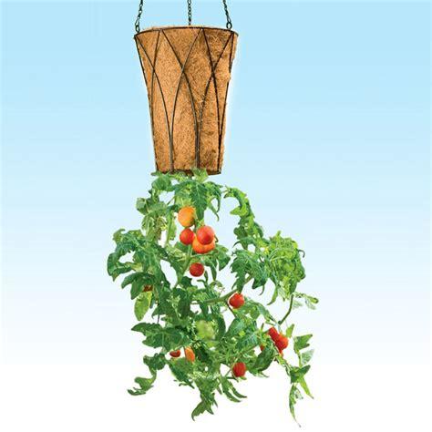tomato planter deluxe revolution upside down tomato planter the green head