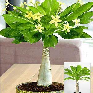 Zimmerpflanzen Für Dunkle Räume : schatten zimmerpflanzen zimmerpflanzen f r dunkle ecken ~ Michelbontemps.com Haus und Dekorationen
