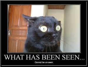 cat jokes for black cat humor black cat nation