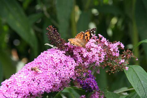 Mit Den Richtigen Pflanzen Schmetterlinge In Den Garten