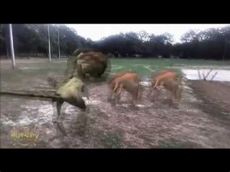 Matsley Dinosaures Capture Team Herbivore