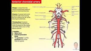 Magdy Said Anatomy Series Neuroanatomy 15