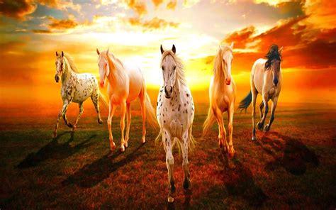 Seven Horse Wallpapers Modafinilsale