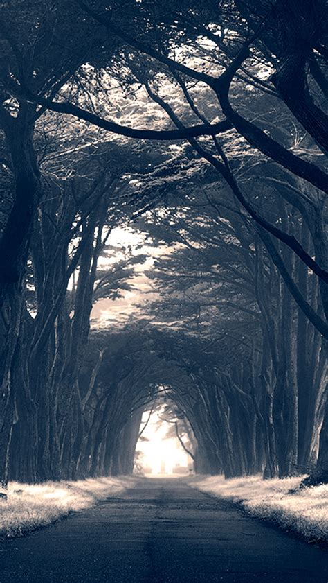 dark trees avenue  iphone wallpapers