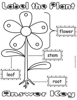label the plant cut amp paste worksheet freebie by the 731 | original 1296538 3