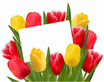 Tulips Clipart Transparent Yellow Tulip March Jar