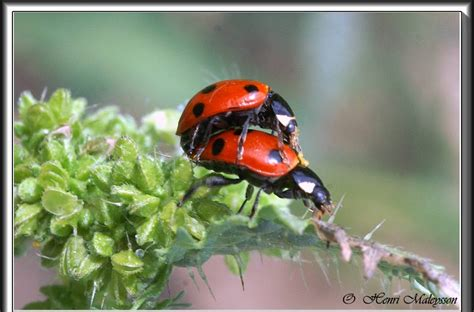 photos araign 233 es insectes fleurs henri maleysson quelques