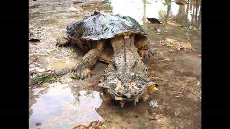 unbekannte kreaturen schaurige wesen unseres planeten