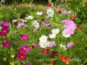 winter blooming annuals say goodbye to summer with fall blooming annuals birds and blooms