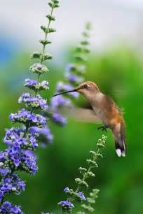 Little Hummingbird