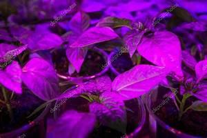 Led Grow Erfahrung : beleuchtung pflanzen ~ Watch28wear.com Haus und Dekorationen