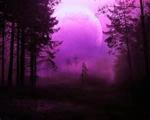 Purple Forest Path