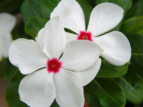 flower albert moyer jr