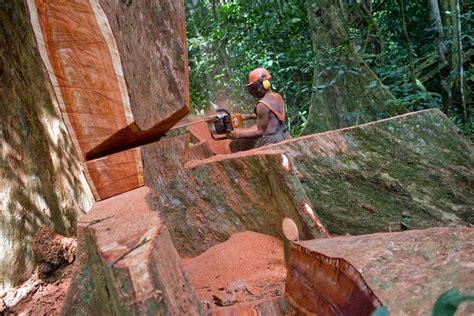 luca zanetti :::: photographer :: reportage :: precious woods