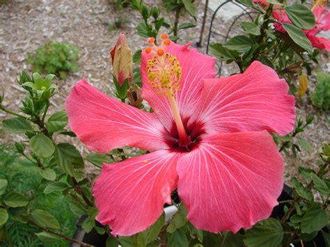 Summer Flower Tropical Flowers
