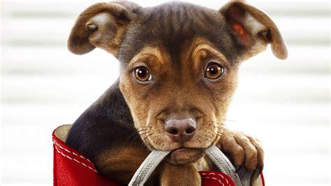 dogs  home   reviews popzara press