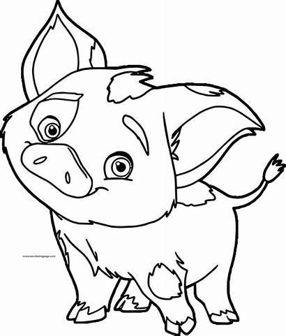 Pua Coloring Pig Disney Moana Pages Adult