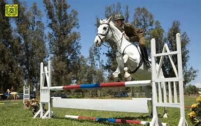 Caballo Equitacion Utiliza Objetos Pretal Montado Silla