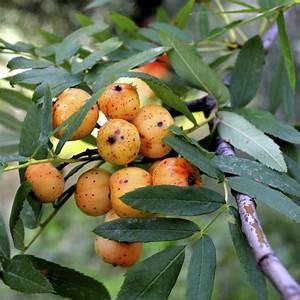 Arbre A Fruit : arbre caduc liste ooreka ~ Melissatoandfro.com Idées de Décoration