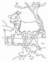 Goat Coloring Goats Farm Animal Billy Gruff Kid Three Boer Animals Printable Clipart Template Sheets Colouring Mom Templates Desenho Cabra sketch template