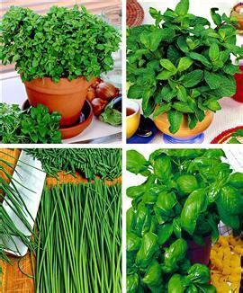 plantes aromatiques cuisine plante aromatique archives page 14 of 15 fleur de