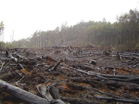 coca production deforestation and climate change