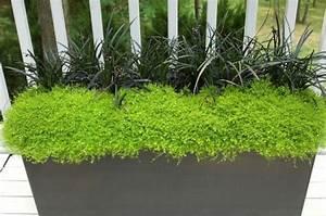 Plantes D Ombre Extérieur : les plantes d ombre cherchent leurs places ~ Melissatoandfro.com Idées de Décoration