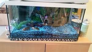 Aquarium Zubehör Günstig : schwarz blaue kleinanzeigen aquaristik kaufen verkaufen bei deinetierwelt ~ Frokenaadalensverden.com Haus und Dekorationen