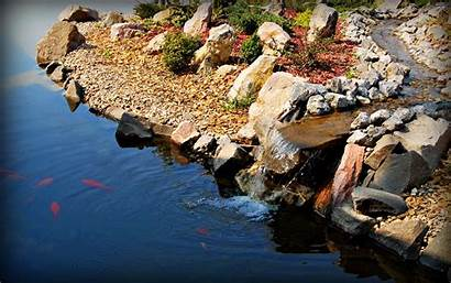 Pond Koi Fish Mobile Wallpapersafari