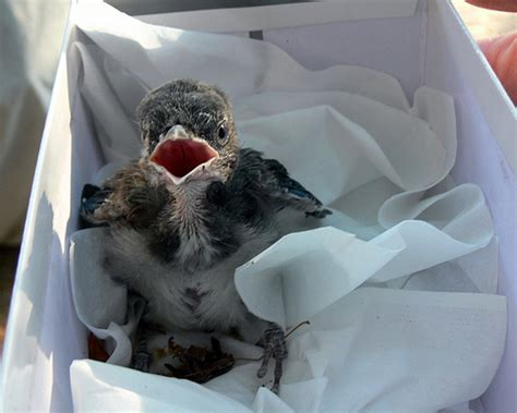 how to take care of an injured bird or other found wildlife