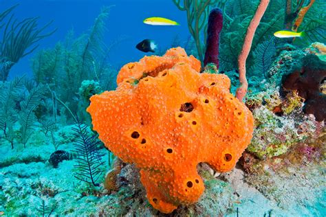Ocean Sponges|sea Sponges|sponges For Saltwater Aquariums|