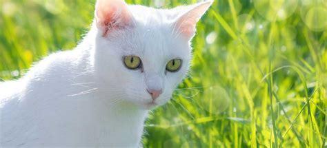 chat interieur ou exterieur chat d int 233 rieur ou chat d ext 233 rieur catsan