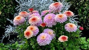 Pflanzen Pflegeleicht Garten : mehrj hrige pflanzen garten natur gestalten erleben ~ Lizthompson.info Haus und Dekorationen