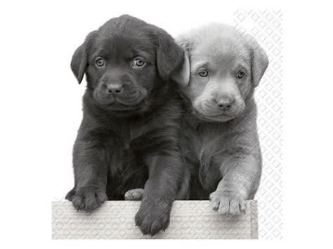 papier servietten hunde labrador welpen tierisch