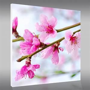 Tableau Forex Fleur Pas Cher