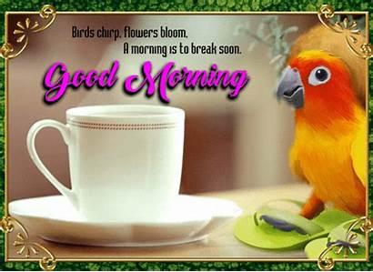 Birds Morning Flowers Chirp Bloom 123greetings Card