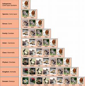 Ms. Mora's Biology Blog: CLASSIFICATION AND TAXONOMY ...