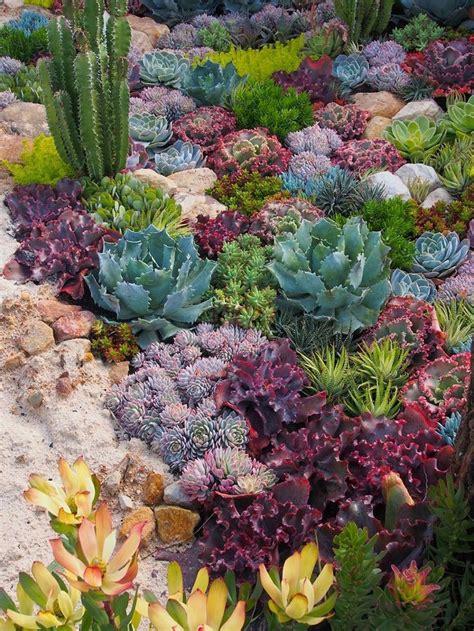 Garden Beautiful Succulents beautiful succulent and cactus garden 18 succulents