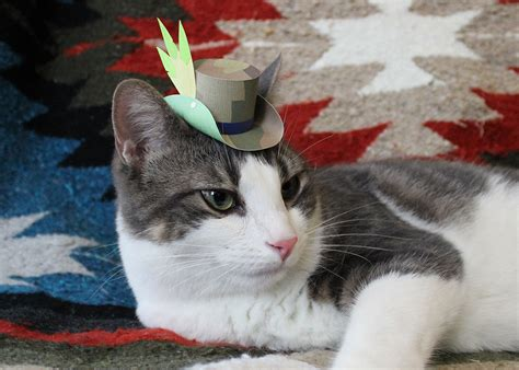 21 Tiny Fashionable Hats You Can Make For Your Cat