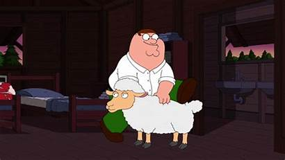 Sheep Cigar Gifs Funny