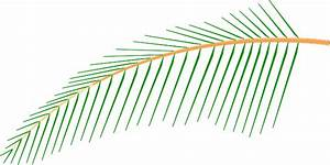 Coconut Palm Leaf Clip Art (21+)