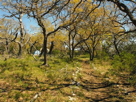 lost maples state natural area primitive campsites hike  texas parks wildlife department
