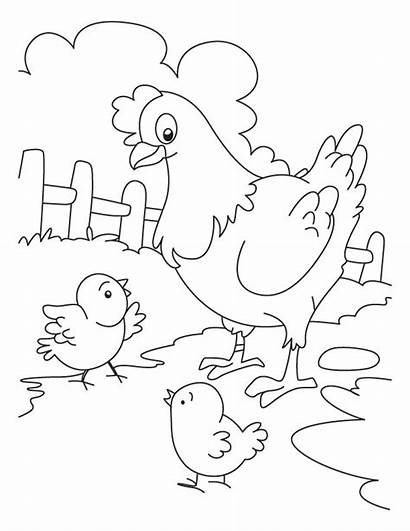 Coloring Chicken Pages Printables
