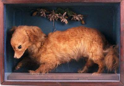 extinct dog breeds extinct dog breeds  dogs