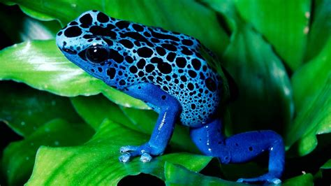 Free Animated Frog Wallpaper - tree frog wallpaper 64 images