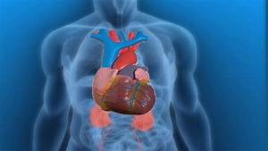 Hints You May Have Heart Disease On Vimeo