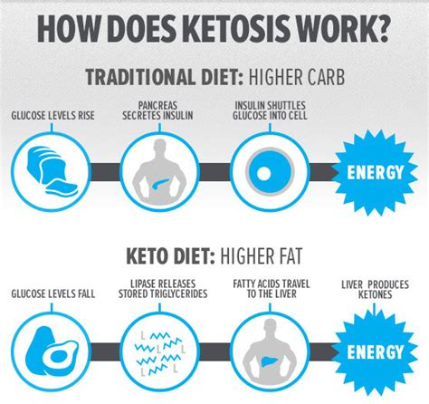 all about the keto diet a beginners guide