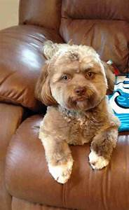 This Photo Of A Dog Who Looks Like A Human Is Freaking ...