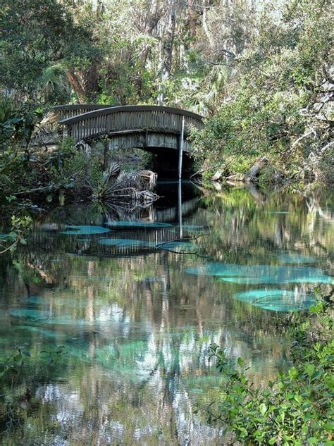 Hammock Springs by 40 Best Images About Fern Hammock Springs On
